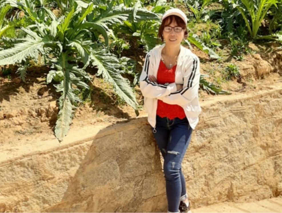 Nguồn Gốc Cây Atiso - Cây Atiso Đà Lạt Được Trồng Nhiều Nhất Ở Đâu