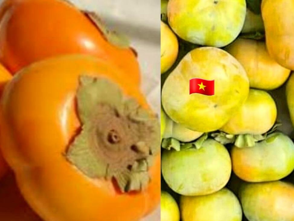 Hồng không rõ nguồn gốc thường có màu vàng cam ,vỏ dày không bị trầy xước như hồng giòn Đà Lạt